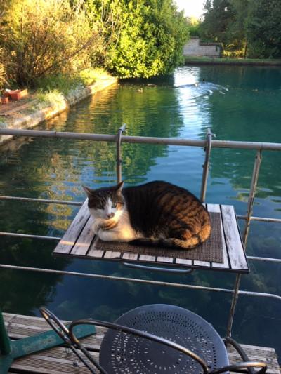 Chat couché sur la table devant le bassin du moulin de la chambre d'hote
